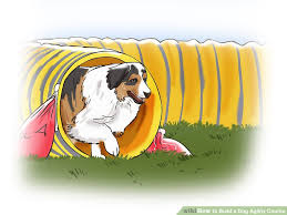 Backyard Agility Course How To Build A Dog Agility Course 11 Steps With Pictures