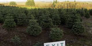 images of christmas tree farms near me best christmas tree