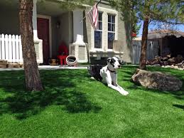 Backyard Ideas For Dogs How To Install Artificial Grass White City Florida Artificial