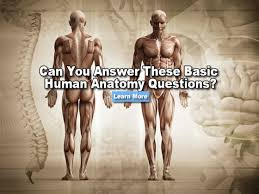 Human Anatomy Exam Questions Can You Answer These Basic Questions About Human Anatomy