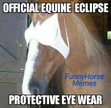 Horse Riding Meme - funny horse memes home facebook