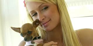 rip tinkerbell paris hilton u0027s canine bff dies 14 huffpost