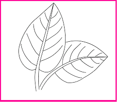 leaf coloring page nature coloring page leaves coloring page