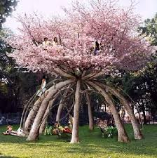shangralafamilyfun shangrala s most unique trees 2