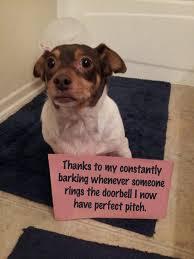 Dog Shaming Meme - dog boasting a photo gallery dog and photo galleries