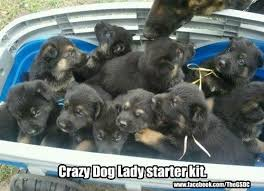 Crazy Dog Lady Meme - german shepherd lore on twitter crazy dog lady starter kit http