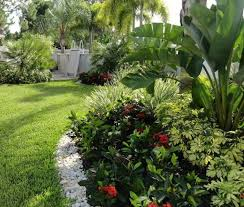Florida Backyard Landscaping Ideas by 36 Best Landscape Plants Uae Images On Pinterest Landscaping