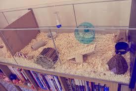 misadventures of alice ikea detolf hamster cage jaula hamster