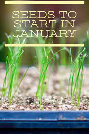 seeds for a really early start gardens plants and garden ideas