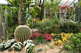 Backyard Plants Ideas 34 Sharp Cactus Garden Ideas