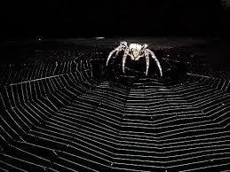 spider wallpaper qygjxz