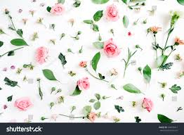 floral pattern made pink beige roses stock photo 544279411