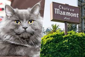 chateau marmont threatens to sue cateau marmont cat grooming