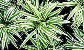 plantes d駱olluantes chambre plantes depolluantes chambre les plantes dacpolluantes plantes