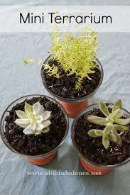mini clay pot craft party mini terrarium