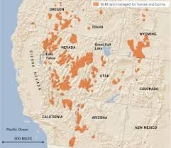 Blm Maps New Mexico by Interactive Graphic The West U0027s Wild Horses Data Desk Los