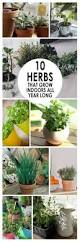 10 mistakes new herb gardeners make and how to avoid them herb