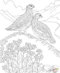 Willow Alaska Map by Willow Ptarmigan And Forget Me Not Flowers Alaska Bird And Flower