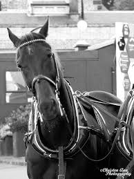 the world u0027s best photos of horseandcart and horses flickr hive mind