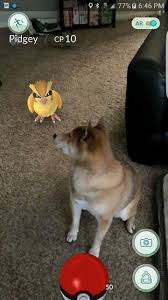 american eskimo dog vs keeshond dogs vs pokémon see who will come out on top american kennel club