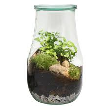 Fern Decor by Fern In 9 In Large Terrarium Weck Lgtw2 The Home Depot