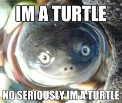 Turtle Memes - im a turtle no seriously im a turtle rape turtle quickmeme