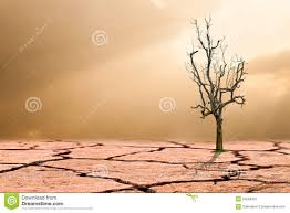 global warming concept dead tree on cracked desert stock image
