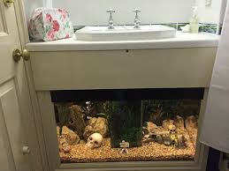 Tropical Themed Room - tropical themed room with fish tank underneath the basin picture