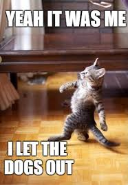 Who Let The Dogs Out Meme - cool cat stroll meme imgflip