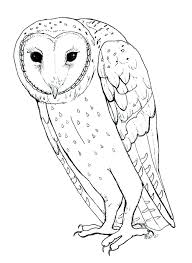 barn owl coloring pages printable coloring page