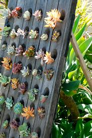 this american home idea upright succulent garden