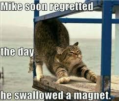 Cute Cats Memes - cat memes happy birthday cat memes funny cat memes pictures