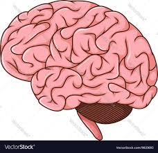 Cartoon Human Anatomy Human Brain Cartoon Royalty Free Vector Image Vectorstock