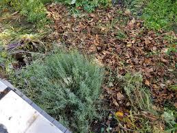 lasagna gardening and composting through winter u2013 happy herb lady