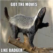 Meme Honey Badger - baby honey badger google search funnies pinterest honey badger