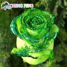 green roses aliexpress buy loss promotion 50pcs golden green