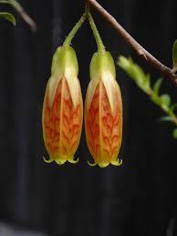 plant catalog list rhododendron species botanical garden