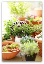 best 25 beginner vegetable garden ideas on pinterest vegetable