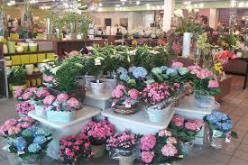 boca raton florist field of flowers