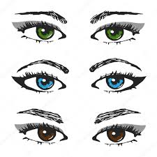 set of female eye sketches different types of eyebrows and the