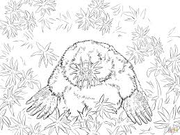 realistic star nosed mole coloring page free printable coloring