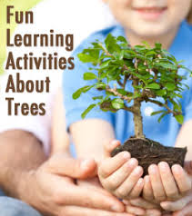 branching out learn all about trees connections academy