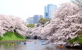 imagenes tokyo japon ofertas de vuelos hoteles viajes y circuitos por japón viajes el