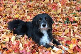 tips for keeping your pets safe this thanksgiving the mint hill