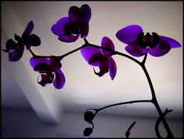 Flower Orchid File Orchid Flower Jpg Wikimedia Commons