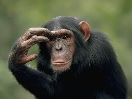 Monkey Meme Generator - thinking monkey blank template imgflip