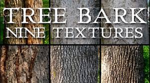 200 excellent free high quality tree bark textures blueblots