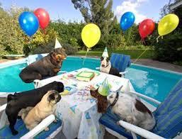 dog birthday party how to organize a dog birthday party dog
