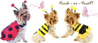 Halloween Costumes Yorkies Bee Designed Cute Costume Dog Pinx Pets