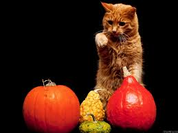 pumpkin phone wallpaper cat pumpkin background wallpaper free wallpapers stock
